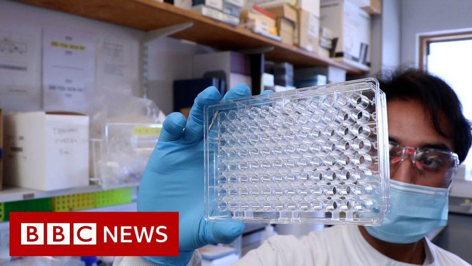 What are the Delta Covid variant symptoms? – BBC News